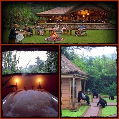 Sanctuary-Gorilla-Forest-Camp-Bwindi.jpg