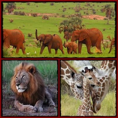 7 Day Kidepo Valley Park - Murchison Falls Park Wildlife Safari