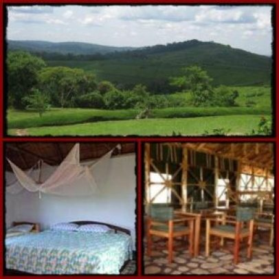 Chimpanzee Forest Guest House - Kibale Forest