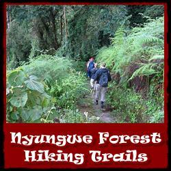 Nyungwe-Forest-Hiking-Trails