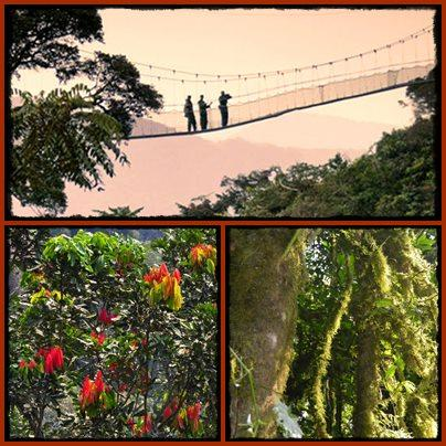 Top Things to do and see in Nyungwe Forest