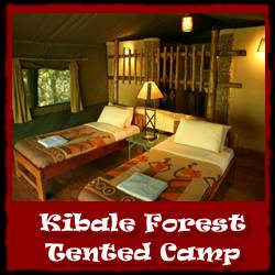 Kibale-Forest-Tented-Camp-small