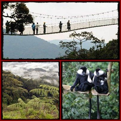 nyungwe-forest-page