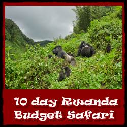 10-day-budget-safari-Rwanda--link