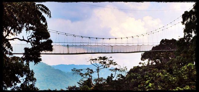 remarkable Rwanda - more than Mountain Gorillas