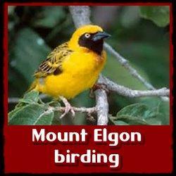 mount-elgon-birding