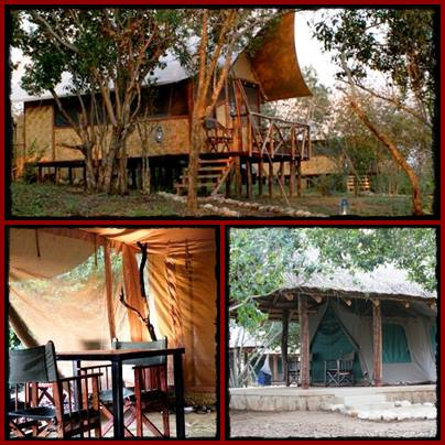 Bush Safari Lodge - Queen Elizabeth Park
