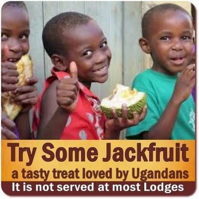 Try some tasty Jackfruit in Uganda