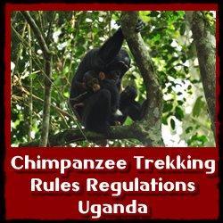 Chimpanzee-Rules