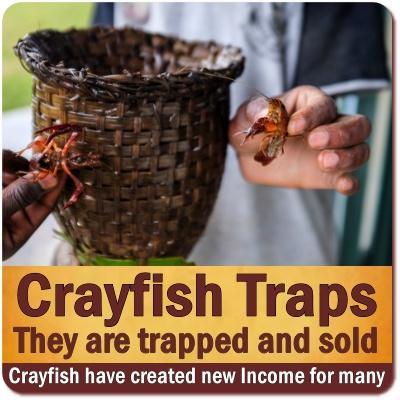 Lake Bunyonyi Crayfish - A Culinary Delight