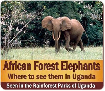 Best Places to see the African Forest Elephants