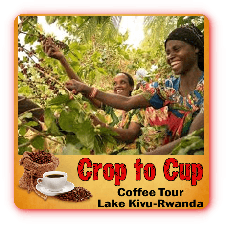 The Crop to Cup Coffee Experience along Lake Kivu - Rwanda