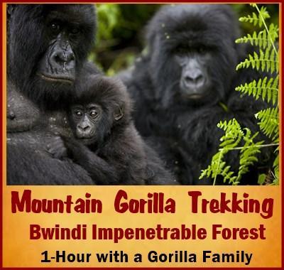 8 Day Pride of Uganda Gorilla Chimpanzee Wildlife Safari