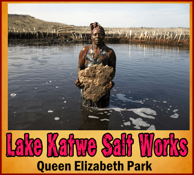 Top Things to Do and See in Queen Elizabeth Park - Uganda