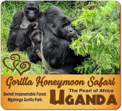Planning Your Gorilla Honeymoon Safari in Uganda the Pearl of Africa