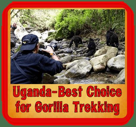 7-Day Gorilla Safari