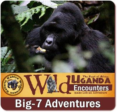 Big-7 Animals that you will find in Uganda