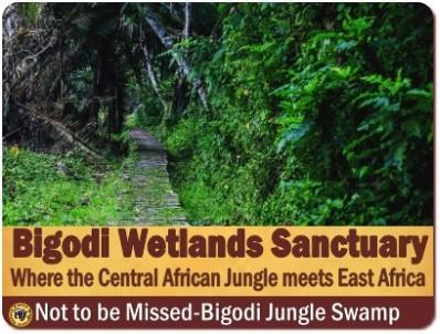 Bigodi Wetlands Sanctuary - A Jungle Swamp