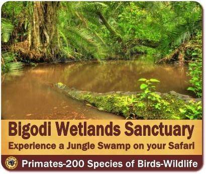 Bigodi Wetlands Sanctuary - A Jungle Swamp near Kibale Forest