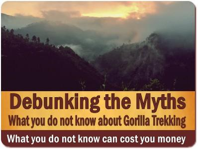 Things You Never Knew About Gorilla Trekking