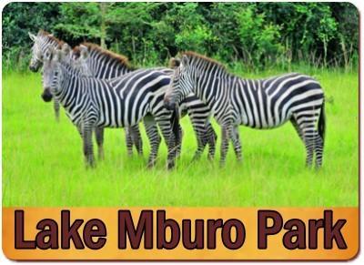 10 Day - Experience the Wild of Uganda Safari