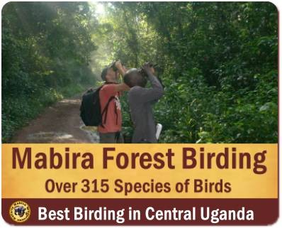 Top Things to Do and See in Mabira Forest between Kampala - Jinja