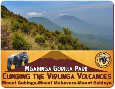 Climbing the Virunga Volcanoes