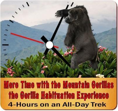 Gorilla-Chimpanzee Habituation Experience Safari