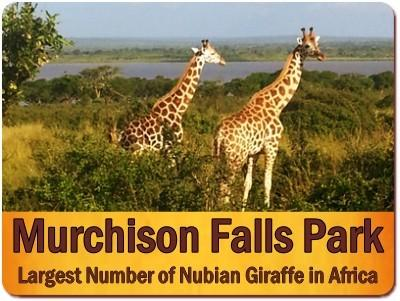 3 Day Moderately Priced Murchison Falls Park Wildlife Safari