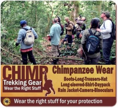 Kalinzu Forest - Chimpanzee Tracking - Birding - Nature Walks