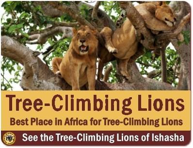 Best Gorilla Trekking Safari Add-ons and Options