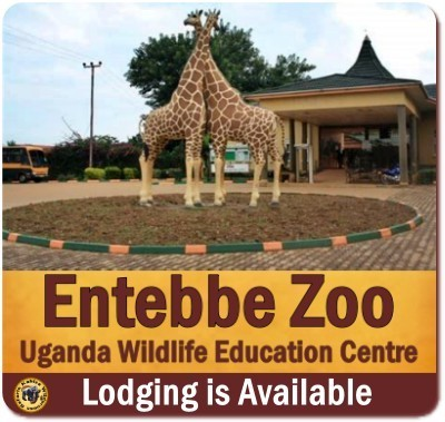 Top Things to Do and See near and around Kampala