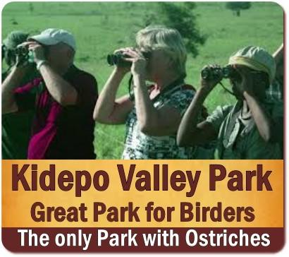 Top Things to Do and See in Kidepo Valley Park - Northeast Uganda