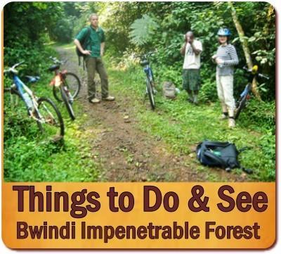 Clouds Mountain Gorilla Lodge - Nkuringo - Bwindi Impenetrable Forest