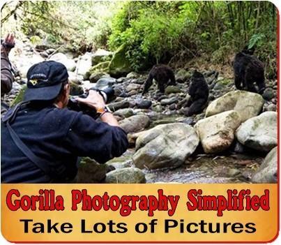 Gorilla - Chimpanzee Trek Photography made simple- Helpful Proven Tips
