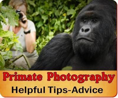 Gorilla - Chimpanzee Trek Photography made simple