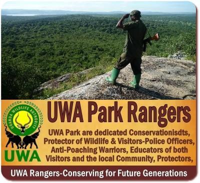 Uganda Wildlife Authority Rangers