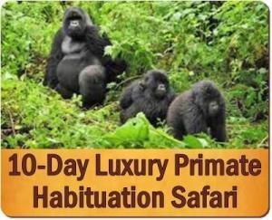 The Best Gorilla Habituation Experience Safaris in Bwindi Forest - Uganda