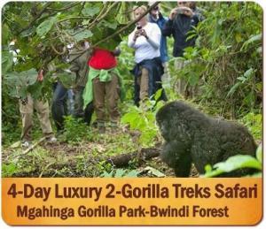 Fly into Rwanda - Trek Gorillas in Uganda - Save Time - Money