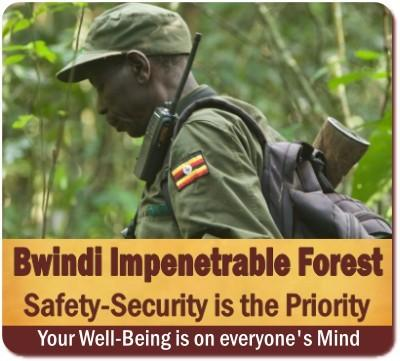 Is it SAFE to visit Bwindi Impenetrable Forest?  The No-Spin Reality