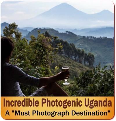 Mountain Gorilla Photographic Safari