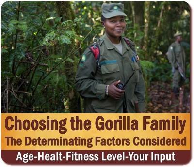 Choosing the Gorilla Family to Trek