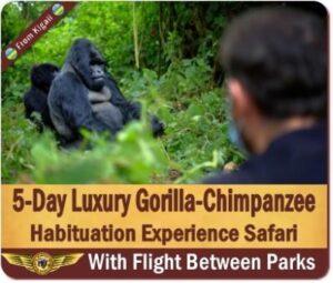 Luxury Fly-In Gorilla Trekking Safaris in Uganda