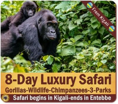Gorillas - Lions - Chimpanzees Luxury Safari