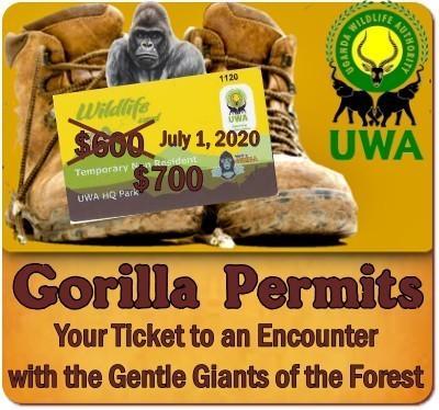 Uganda Gorilla Permit Price increases