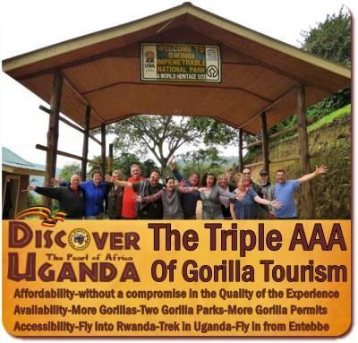 Choose your Gorilla Safari-Value+Midrange, Luxury, Fly-In Gorilla Safaris