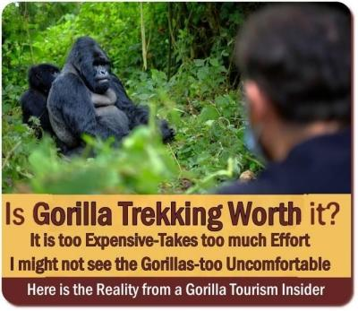 Is Gorilla Trekking Worth It? Is it worth the Money and Effort?
