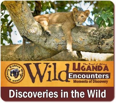 The Amazing Big-7 Animals that you will find in Uganda on Safari