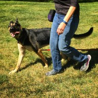 Leo and his guardian practicing their long line walking skills in their off leash training course.
