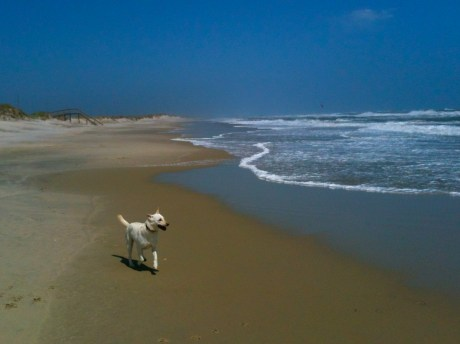 Daisy having fun on this years trip to Hatteras Island.